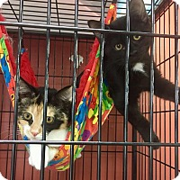 Adopt A Pet :: Anise - Sharon Center, OH