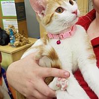 Adopt A Pet :: Twinkie - St. Louis, MO