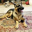 Adopt A Pet :: Ruby 5469