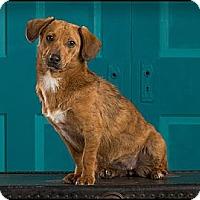 Adopt A Pet :: Missy - Owensboro, KY