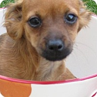 Adopt A Pet :: Baby Heidi - Oakley, CA