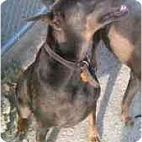 Adopt A Pet :: Rex - New Richmond, OH