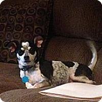 Adopt A Pet :: Buddy - Donaldsonville, LA