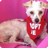Adopt A Pet :: Sachie - Irvine, CA
