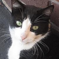 Adopt A Pet :: Handsome - San Jose, CA