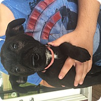 Adopt A Pet :: Zoomed - Lewisville, IN