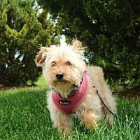 Adopt A Pet :: Addie/TX - Columbia, TN