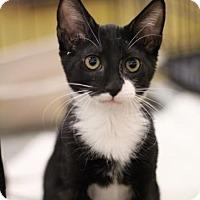 Adopt A Pet :: Mr. Bond - Sacramento, CA