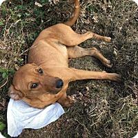 Adopt A Pet :: Alexia Zane - Lancaster, PA