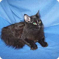 Adopt A Pet :: Dennis - Colorado Springs, CO