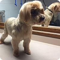Adopt A Pet :: Chauncy (with Casey) - Circle Pines, MN