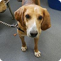 Adopt A Pet :: Coben - Elmwood Park, NJ