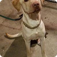 Adopt A Pet :: Jackson - Bend, OR