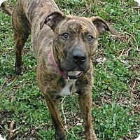 Adopt A Pet :: Isabella - Anchorage, AK