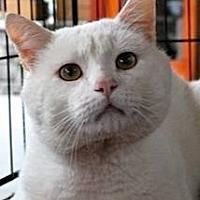 Adopt A Pet :: Yeti - Waggaman, LA