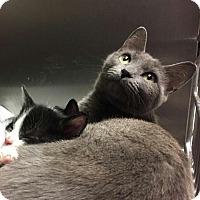 Adopt A Pet :: Nagini - Toast, NC