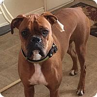 Adopt A Pet :: Rye - Ogden, UT