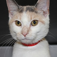 Adopt A Pet :: SWEETS - Clayton, NJ