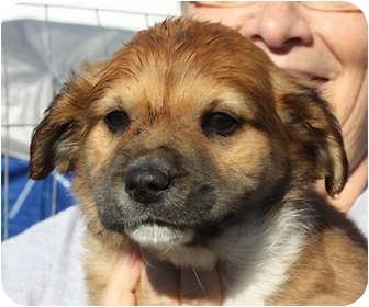 Terrier (Unknown Type, Medium) Mix Puppy for adoption in Marion, Arkansas - Anna-PENDING