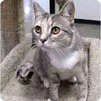 Adopt A Pet :: Wendy - Clementon, NJ