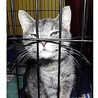 Adopt A Pet :: Price - Owosso, MI