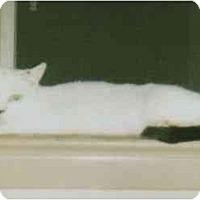 Adopt A Pet :: Lilly (MP) - Little Falls, NJ