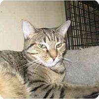 Adopt A Pet :: Roadrunner - Deerfield Beach, FL