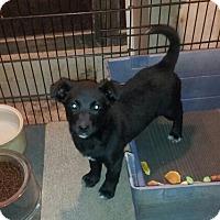 Adopt A Pet :: Cassie - Denver, IN