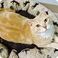 Adopt A Pet :: Tanger - Byron Center, MI