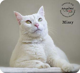 Domestic Shorthair Cat for adoption in Phoenix, Arizona - Missy