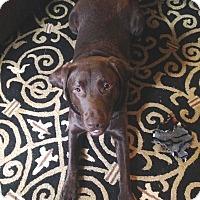 Adopt A Pet :: Charlie - Gig Harbor, WA