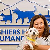 Adopt A Pet :: Molly - Cashiers, NC