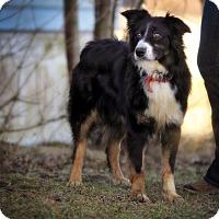 Adopt A Pet :: Dottie - Joliet, IL