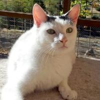 Adopt A Pet :: Leslie - Mountain Center, CA
