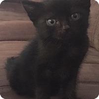 Adopt A Pet :: Denard - Hollister, CA