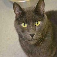 Adopt A Pet :: SUSAN - Rancho Cucamonga, CA