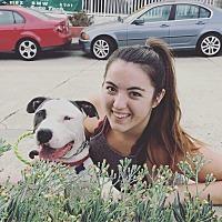 Adopt A Pet :: Chance-ADOPT Me! - Redondo Beach, CA