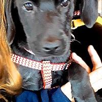 Adopt A Pet :: Cameron - San Diego, CA
