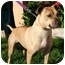 Photo 1 - American Pit Bull Terrier Mix Dog for adoption in Berkeley, California - Pebbles