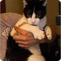 Adopt A Pet :: Mork - Orlando, FL