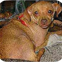 Adopt A Pet :: Prissy - Swiftwater, PA