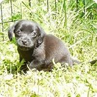 Adopt A Pet :: Rory - Staunton, VA
