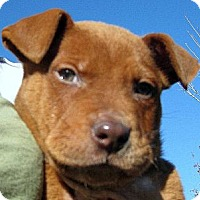 Adopt A Pet :: Baby Patch - Oakley, CA