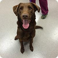 Adopt A Pet :: Behr - Cumming, GA