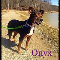 Adopt A Pet :: Onyx - Sharon Center, OH