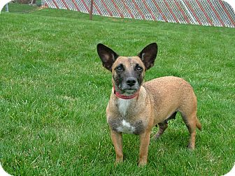 Terrier (Unknown Type, Medium) Mix Dog for adoption in New Oxford, Pennsylvania - Mae