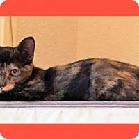 Adopt A Pet :: Topaz - Courtesy Post - Euless, TX