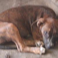 Adopt A Pet :: Dara - Columbia, KY