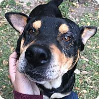 Adopt A Pet :: Rex - San Antonio, TX