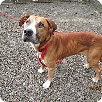 Adopt A Pet :: Sawyer - Tillamook, OR